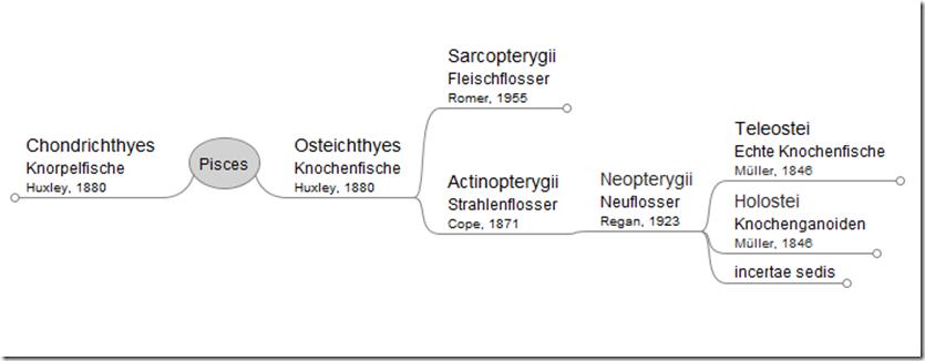 Auszug aus der grafischen Darstellung der Aufstellung der Fische, ausgehend vom Knotenpunkt zeigt sie wenige Unterelemente der Knochenfische.